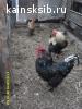Куплю любые корма для животных и автомотосредства,обмен на животных и птицу